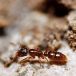 Унищожаване на мравки