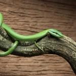 Борба със змии