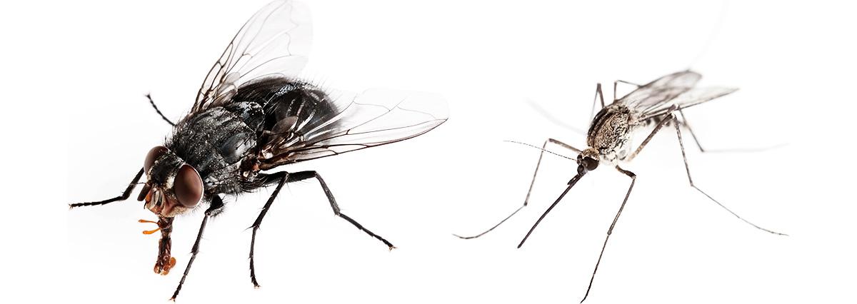muhi_i_komari_1200