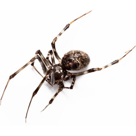 Унищожаване на паяци