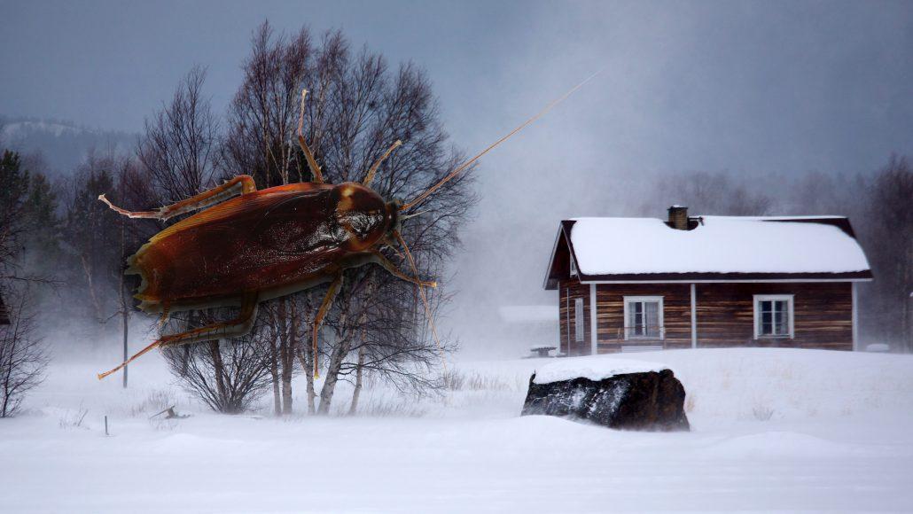 хлебарки къде се крият хлебарките през зимата