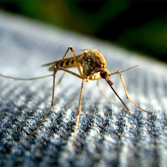 Пръскане против мухи и комари