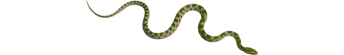 snake_1200h600